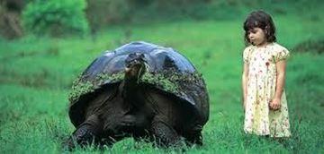 Billede af Galapagos liveaboard