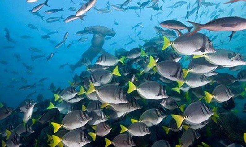 Billede til varegruppe Galapagos