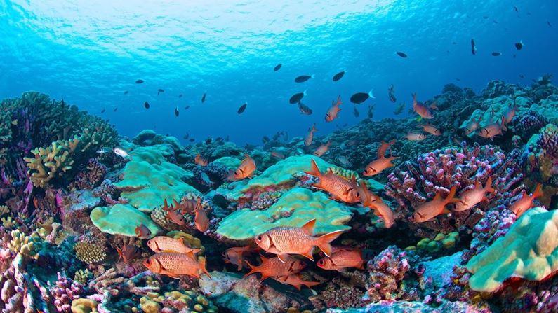 Billede til varegruppe Fransk Polynesien