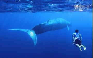 Billede af Sri Lanka - Svøm med blåhvaler