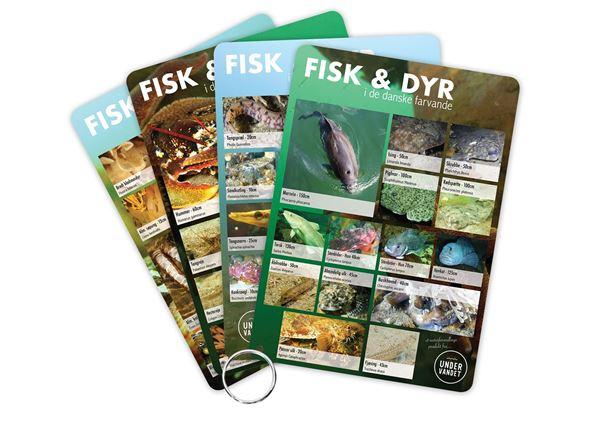 Billede af Fisk & Dyr i de danske farvande